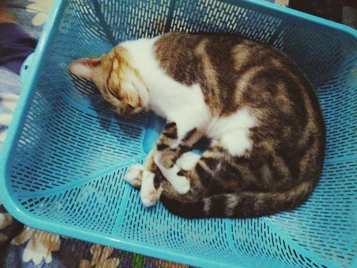 when my cat sleeping sooo TAK BOLEH BELA .. Sleeping Cat Cat♡ Naughty Cat but Cute