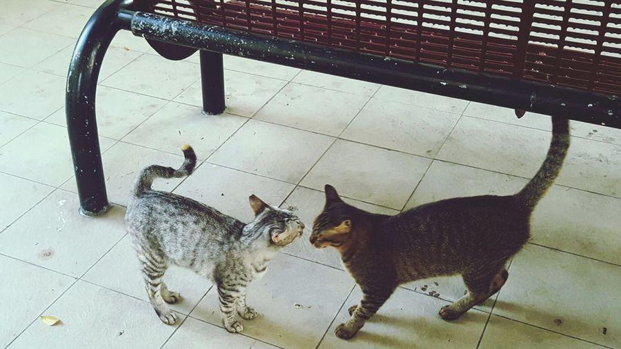 Cats Cats Of EyeEm Outdoors Feline Furball Meow Cats In My Neighbourhood Where Lovers Meet Couple