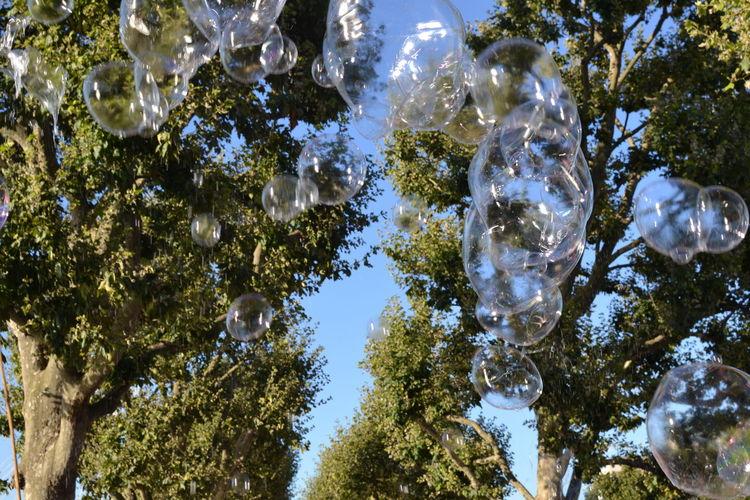 Bubbles... Bubbles...Bubbles.... Bubbles And Trees Leisure Time The Queens Walk near London Eye In Jubilee Gardens Summer Evening
