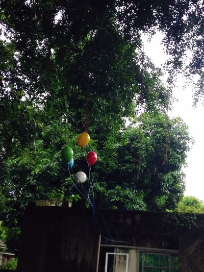 三是青春物語,四是碰巧遇見你 Colors Tainan 年輪說 青春 Tree Balloon Multi Colored Low Angle View Building Exterior Helium Balloon Branch Colorful Day Town Growth Outdoors Fragility Green Color High Section Vibrant Color No People Green
