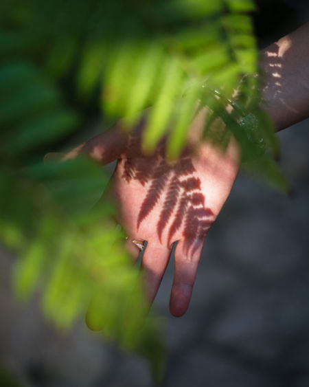 Abstract Beauty In Nature Close-up Day Finger Focus On Foreground Green Color Growth Hand Holding Human Body Part Human Hand Leaf Nature One Person Outdoors Plant Plant Part Real People Selective Focus Vulnerability  Wallpaper