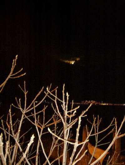 italia Albero Baum Beauty In Nature Close-up Fotografia Notturna Fotografía Nocturna Italia Italie Italien Italy Italy❤️ Italy🇮🇹 Luna Mond Moon Nachtaufnahme Nachtfotografie Nature Night Night Photography Nightphotography No People Outdoors Sky Tree