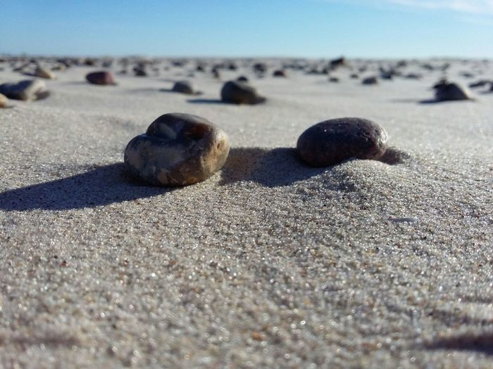 Beach Sand Shore Stones Selective Focus Sea Nature Day Outdoors Beauty In Nature Sandy No People Scenics