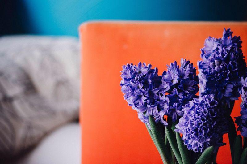 Primavera in casa Colour Of Life