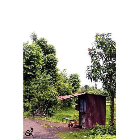 Smallshop Greenery Tricycle Village !!