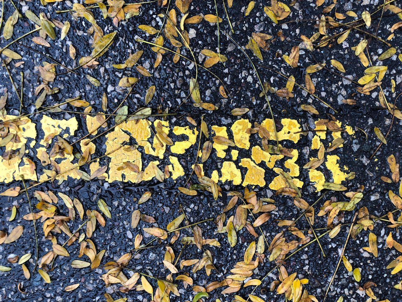 HIGH ANGLE VIEW OF DRY LEAVES ON THE GROUND