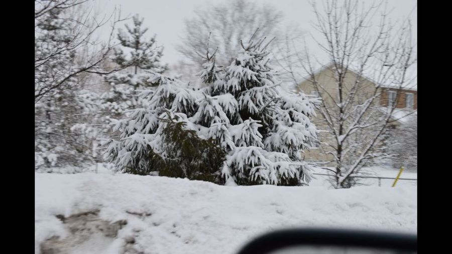 Snow covered plants and trees