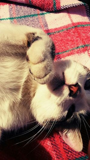 My Lovely Cat Hi! Taking Photos Cute♡ Beautiful cat Love Him ♥ Crazy Animals  Relaxing Summer ☀