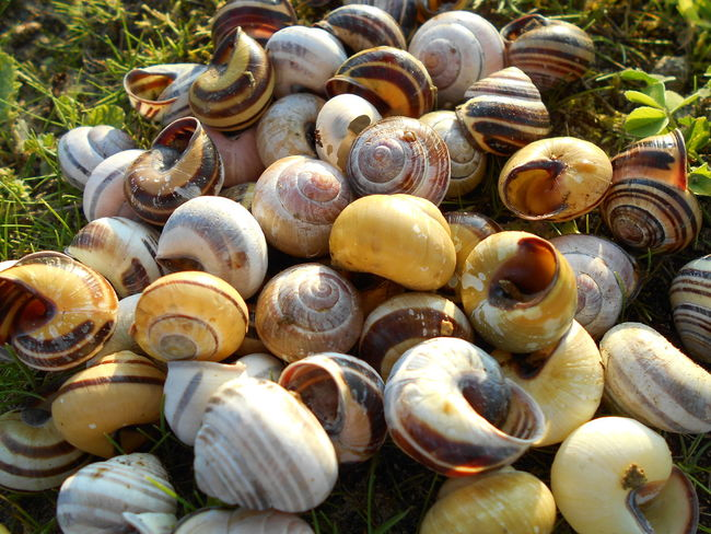 Abundance Animal Shell Backgrounds Beauty In Nature Brown Close-up Day Fragility Full Frame Large Group Of Objects Natural Pattern Nature No People Outdoors Selective Focus Shell Snail
