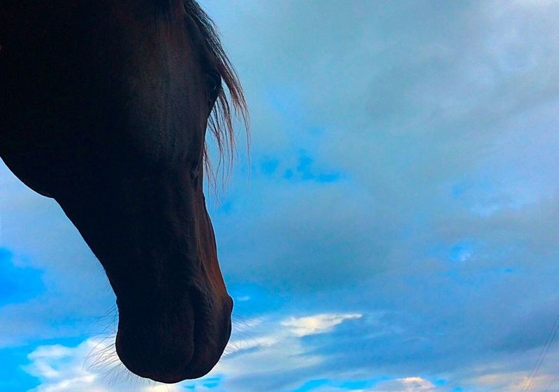 Serenity Beauty In Nature Cloud - Sky Horse Horse Eye Nature Peaceful Sky