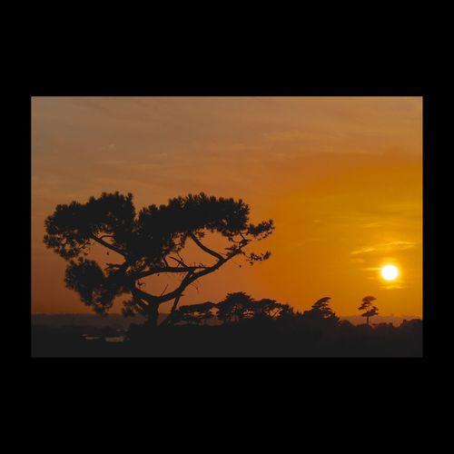 île De Brehat Bréhat Sunset Sunset_collection Beautiful Sunset Tree Silhouette Sunrise Silhouette Silhouettes Orange