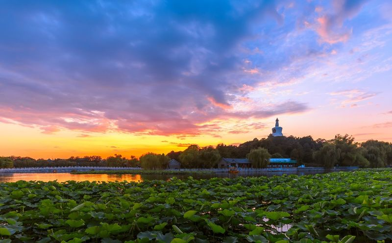 Beijing Beijing, China 43 Golden Moments Landscape Landscape_Collection Landscape_photography Sunset Cityscapes Beihai Park Water Lily Water Lillies History Historic Home Is Where The Art Is Colour Of Life Battle Of The Cities