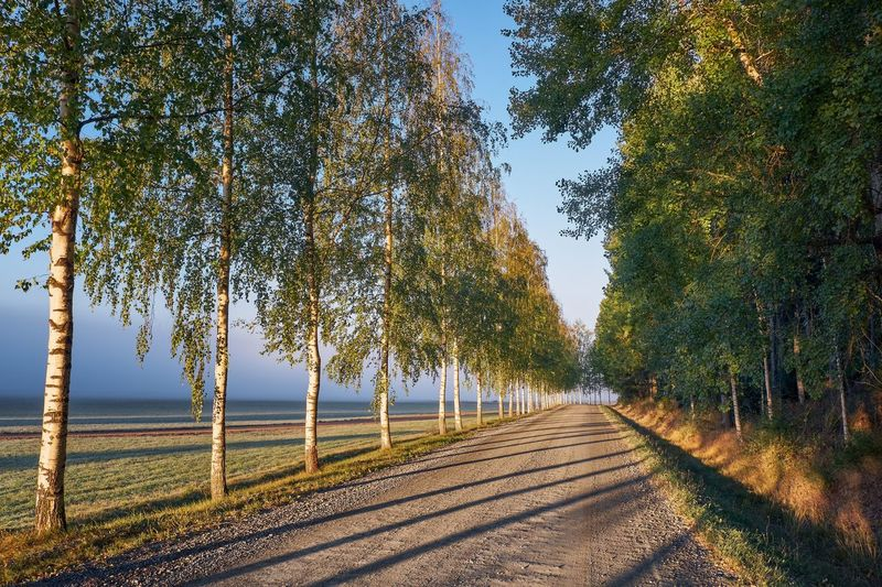 Scenic autumn landscape with road, birches and morning light in Finland Tree Plant Direction The Way Forward Tranquility Beauty In Nature Growth Road Nature Tranquil Scene No People Landscape Scenics - Nature Autumn Outdoors Transportation Treelined Sunlight Finland Sunrise Birch Tree Light And Shadow Tranquility Tranquil Moment Of Silence
