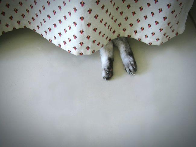 Catfeet Pattes De Chat Siesta Day Indoors  昼寝 猫の足 かわいい♡