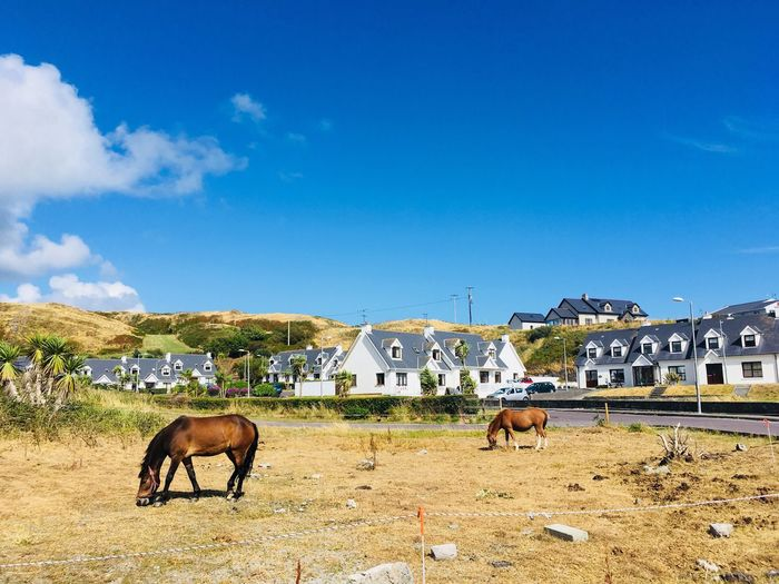Urban in the nature or the nature in the urban...? Blue Sky And Clouds Tragumna Nature On Your Doorstep Ireland West Cork Summer Mammal Animal Themes Animal Sky Domestic Animals Domestic Mammal Animal Themes Animal Sky Domestic Animals Domestic Field Horse Land Nature