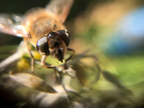 Insect Fly Macro Fly Incects Focus On Foreground Nature Selective Focus Close-up