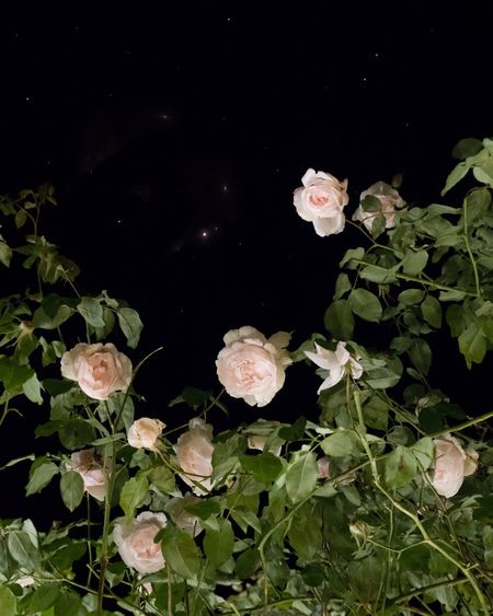 Night meeting Plant Nature Leaf Beauty In Nature Plant Part Growth No People Night Outdoors Tranquility Freshness Flower Leaves High Angle View