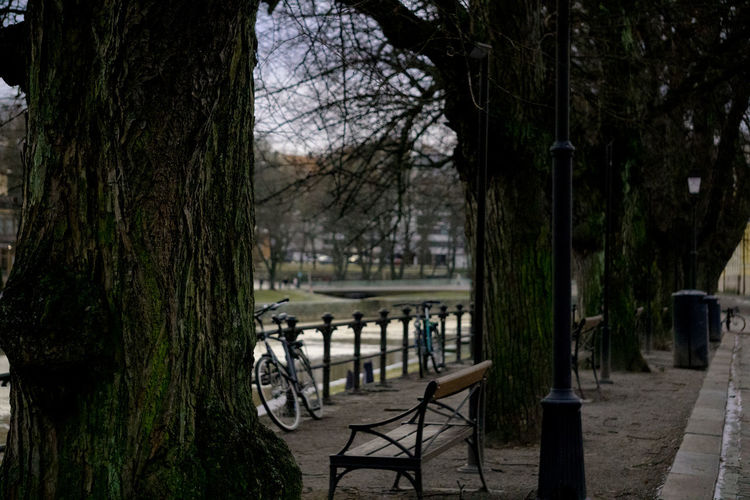 Empty chairs by bare trees by lake against sky