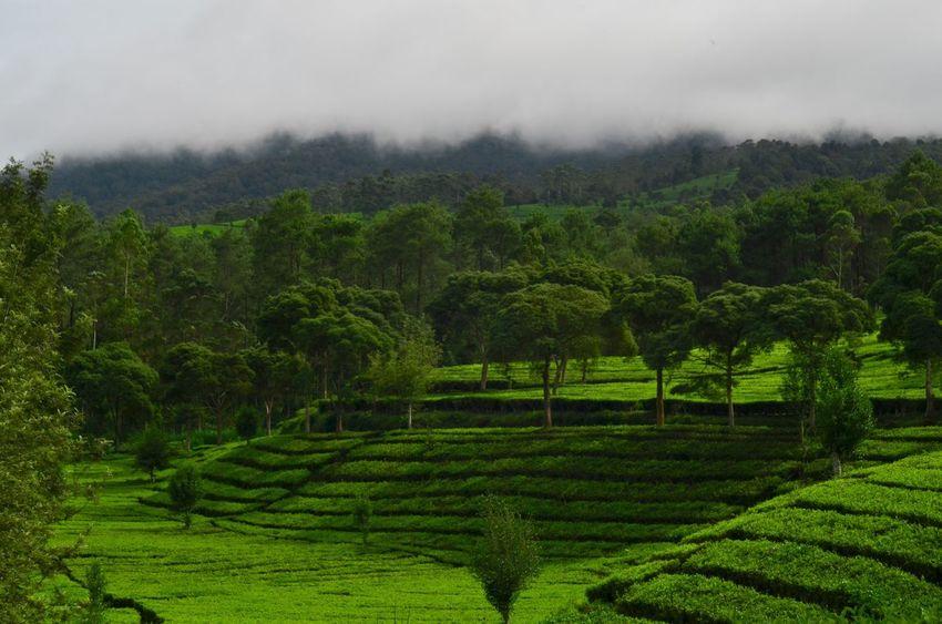 Nature Landscape Nikon MinoltaMD Minolta50mmf2 Beauty In Nature Taking Photos Enjoying Life