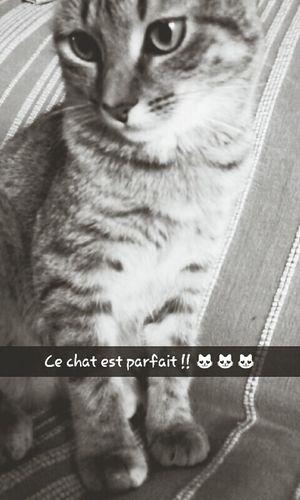 Cat♡ Cute Pets MyLittleCat 💕 🐱