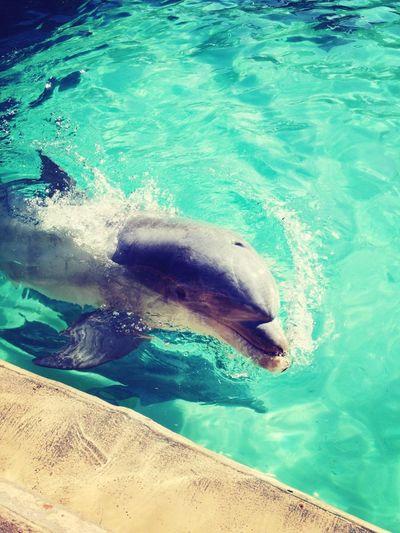 My Buddy From Seaworld