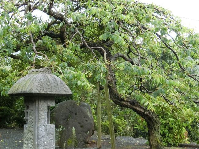 禅 Zen Japanese Temple Stone Lantern Tree Nature