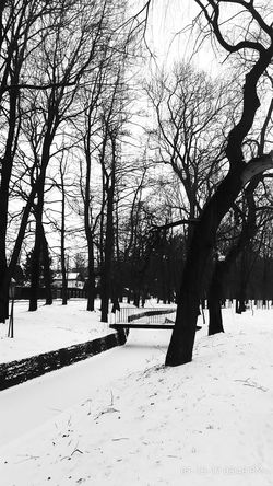 Blackandwhite portiat walk Tree Nature No People Snow Winter Landscape Beauty In Nature Day Sky Outdoors Discover The World Beauty In Nature Poland 💗 Snow ❄ Week Of Eyeem Streetphotography_hdr Eeyem Photo Atmospheric Photo Atmospheric Nature Monchrome City Gate Walking On The Street Nature_ Collection  Walking Around The City  City Park #citylife