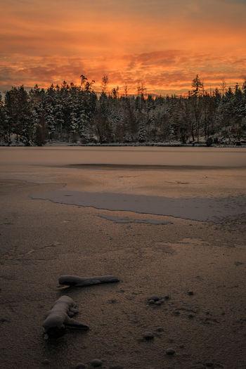 Sonnenaufgang bei Minus 12 Grad am Bergsee in Bad Säckingen Berg Black Forest Frozen Frozen Lake Lake Nature No People Orange Outdoors Red Schwarzwald Sky Sunrise Sunrise_sunsets_aroundworld Tree Tree