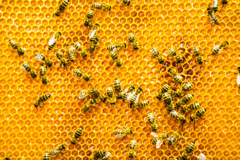 Close-Up Of Honey Bees On Beehive