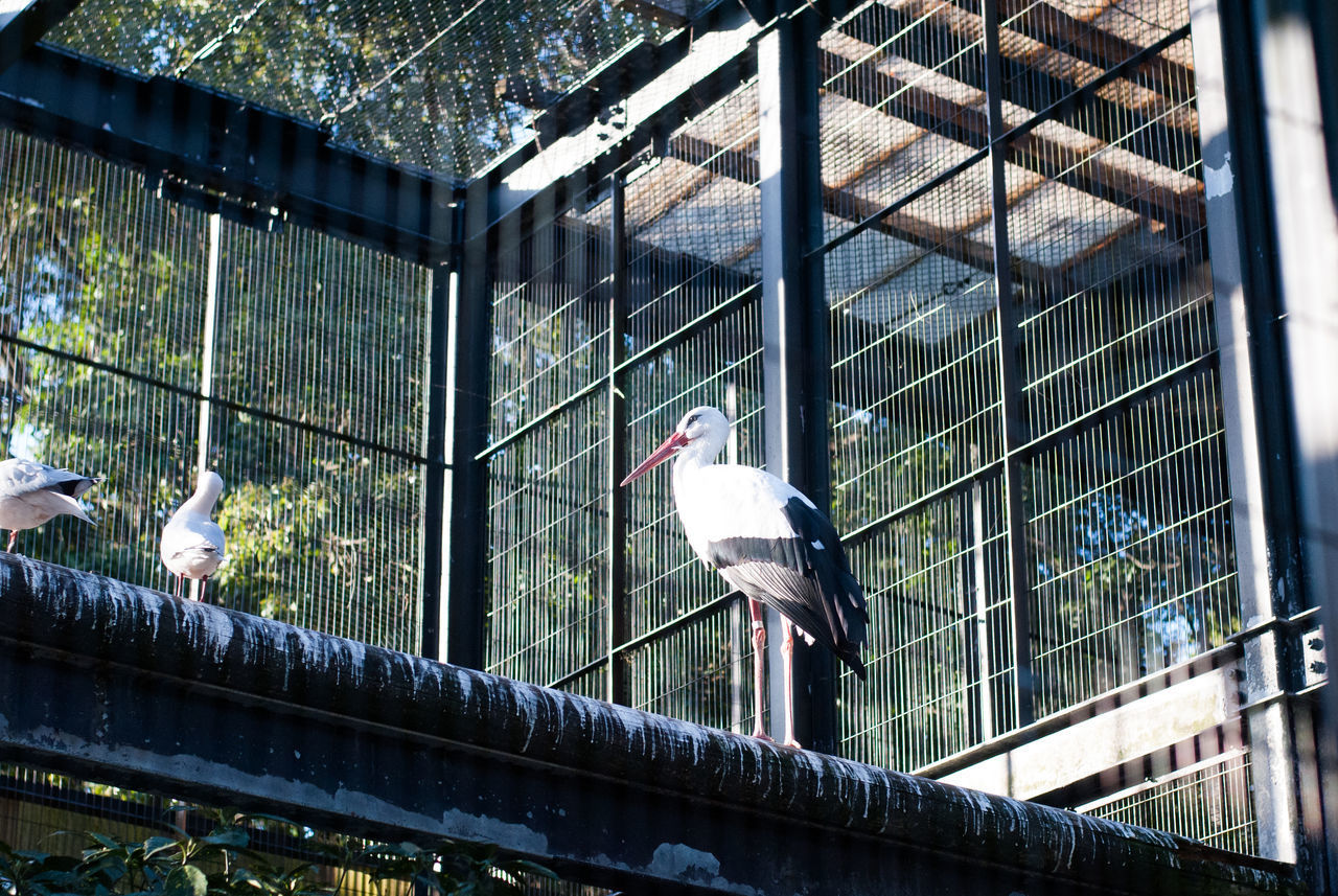 vertebrate, animal themes, animal, bird, group of animals, animal wildlife, animals in the wild, perching, no people, day, metal, architecture, cage, built structure, animals in captivity, nature, railing, outdoors, two animals, focus on foreground