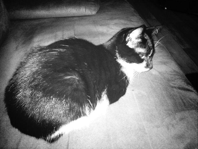 Monochrome My Cat Love Oréo ❤
