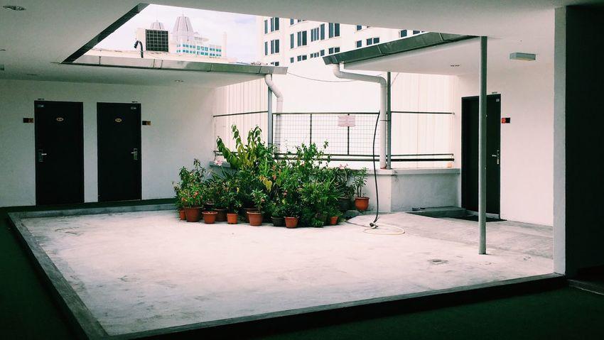 Penang Rooftop Daily Snapshot