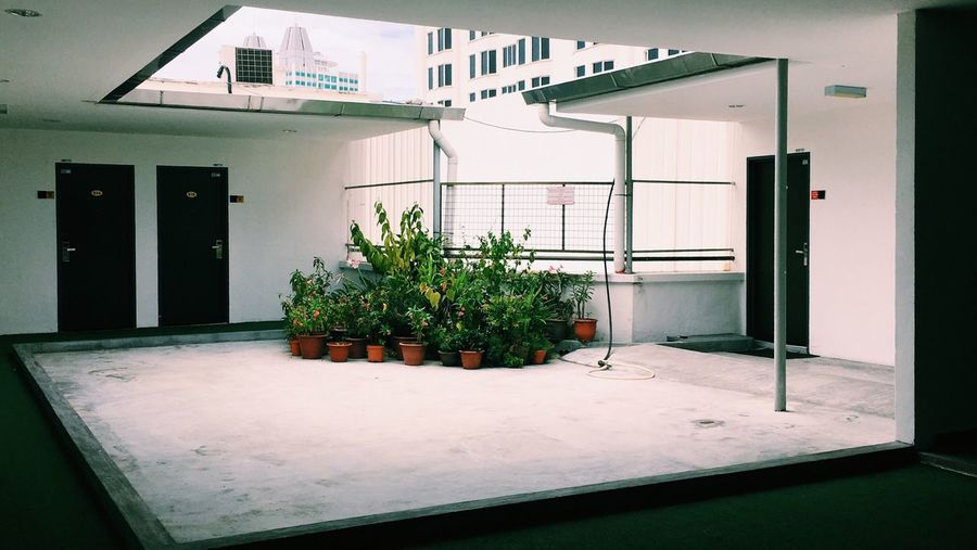 Potted plants in building