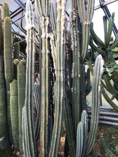 Pflanzen Day No