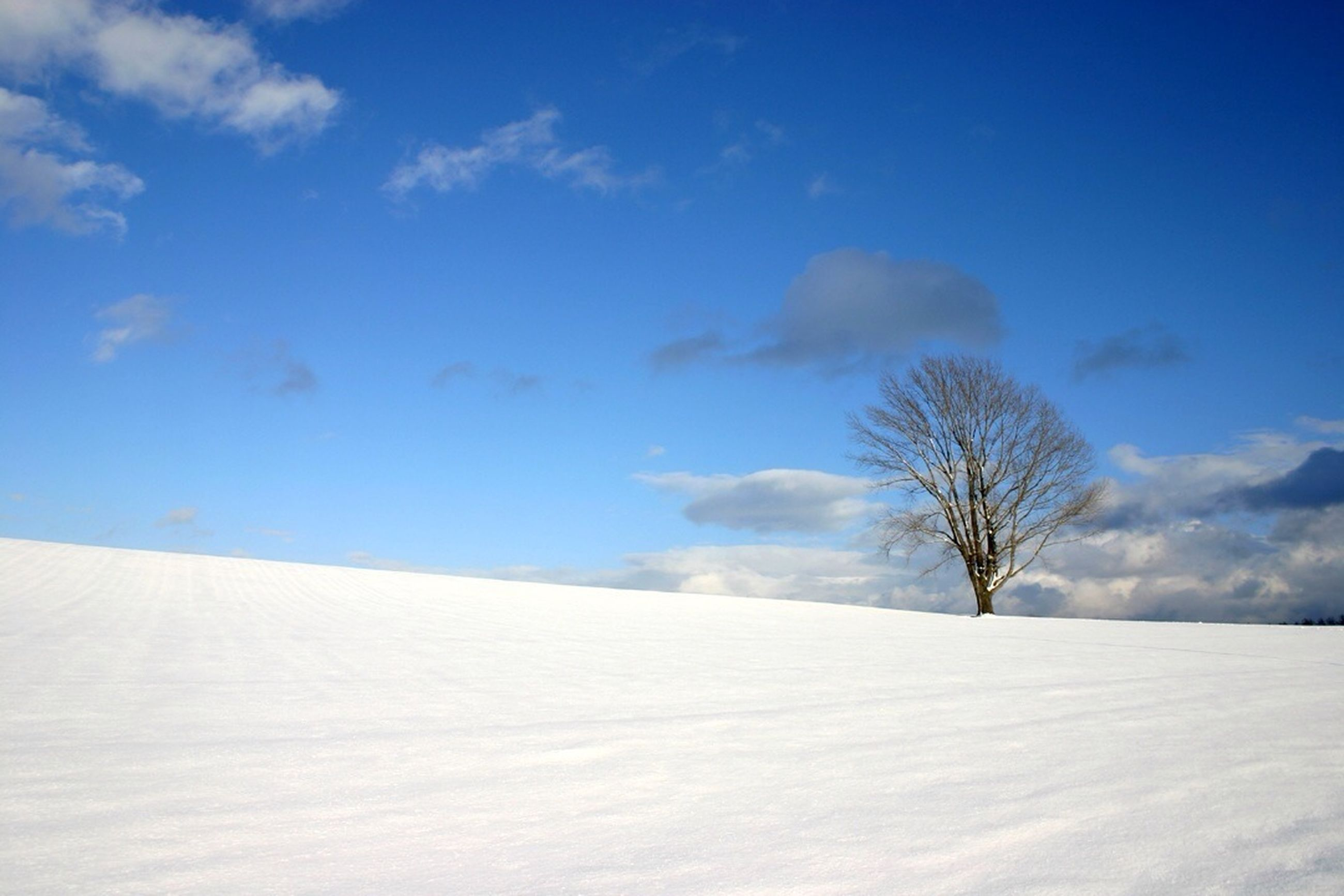 snow, winter, cold temperature, sky, tree, tranquility, tranquil scene, blue, white color, nature, beauty in nature, landscape, scenics, bare tree, cloud - sky, weather, season, cloud, low angle view, white