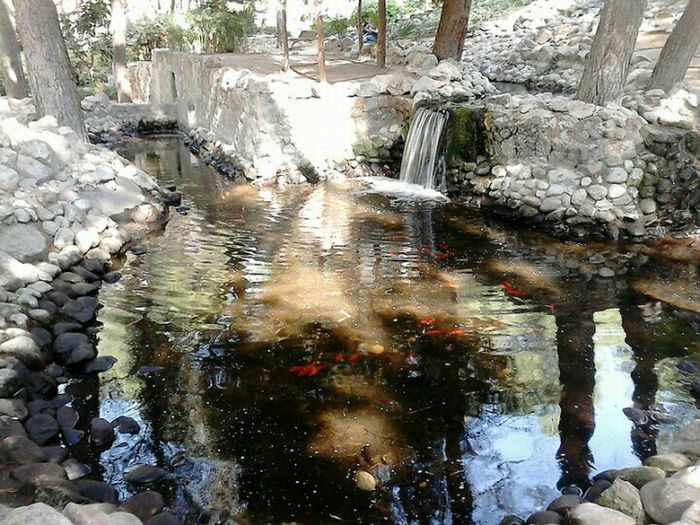 Pond Life Salou Park