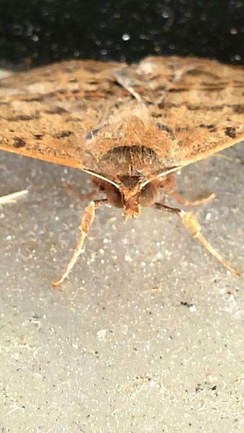 Moths Nature Moth Close Up Nature Close Up Shoot Closeup Shots Closeups Close-up Closeup Photography