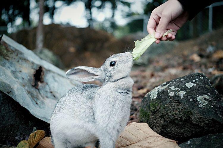 Animal Rabbit 🐇 Rabbit Rabbits One Animal Animal Themes