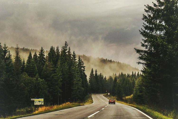 Tree Road Forest Fog No People Cloud - Sky Outdoors Pinaceae Day The Way Forward Winter Winding Road Nature Sky