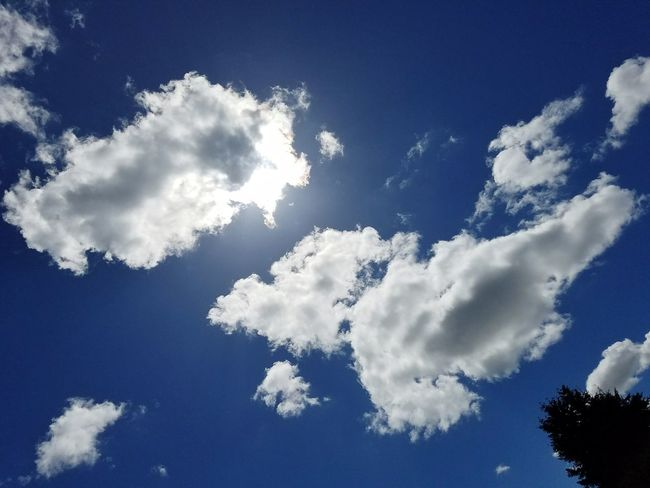 Blue Sky Day Cloud - Sky Nature No People Outdoors Beauty Tranquility Nature Freshness Growth Tranquil Scene Clouds Blue Sky