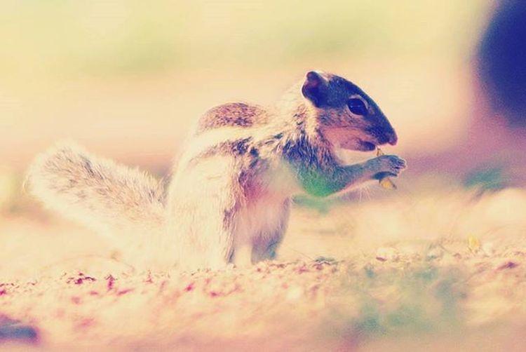 @ponrajanvikram Squirrel Eating Bite Nature Ponrajanvikram Halvat