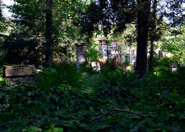 Cemetery Cmentarz Cmentarzżydowski Grave No People Overgrown Shadow Tomb Tranquility