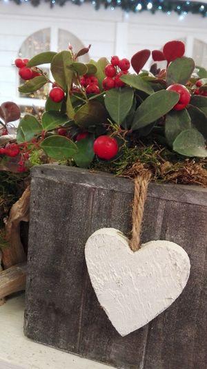 Showcase: January Reality Light Jenuary2016 Trentino Alto Adige Happy Holidays! Mercatino Di Natale Christmas Decorations Love