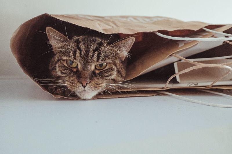 Portrait Of Cat Hiding In Paper Bag