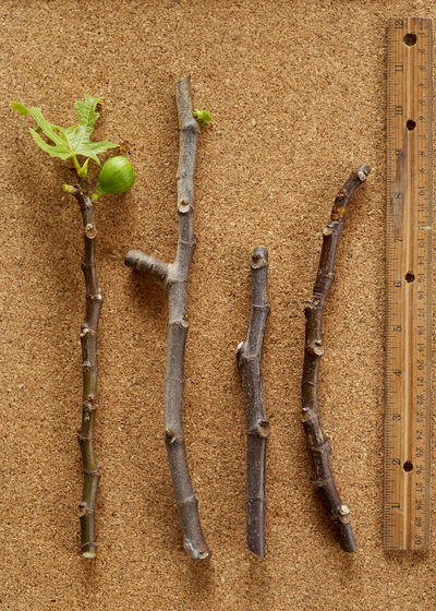 Agriculture Brown Close-up Day Directly Above Food Food And Drink Gardening Group Of Objects Growth Healthy Eating Leaf Nature No People Outdoors Plant Plant Part Vegetable Wall - Building Feature Wood - Material