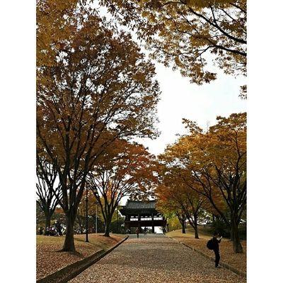 Til we meet again, autumn.