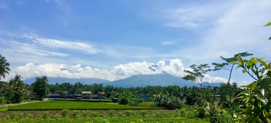 Mt Merapi, Indonesia Agriculture Beauty In Nature Cloud - Sky Day Growth Landscape Mountain Nature No People Outdoors Scenics Sky Tree