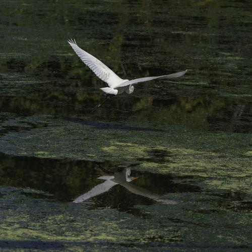 View of bird flying over water