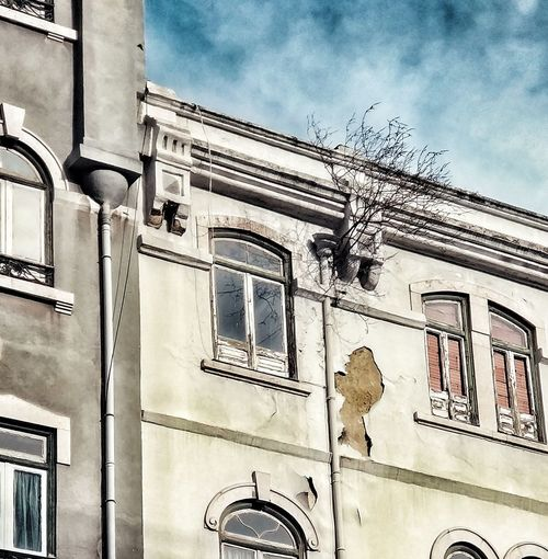 Nature prevails, time gets old Tree Decay Window Lisboa Lisbon Streetphotography Urbanphotography Architecture Building Exterior Built Structure Low Angle View Outdoors Day Façade No People City
