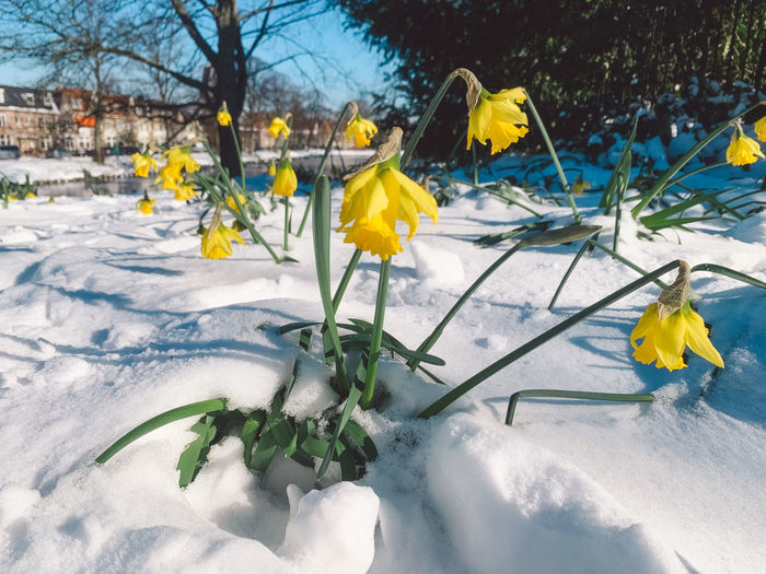 Close-up of yellow flowering plants during winter